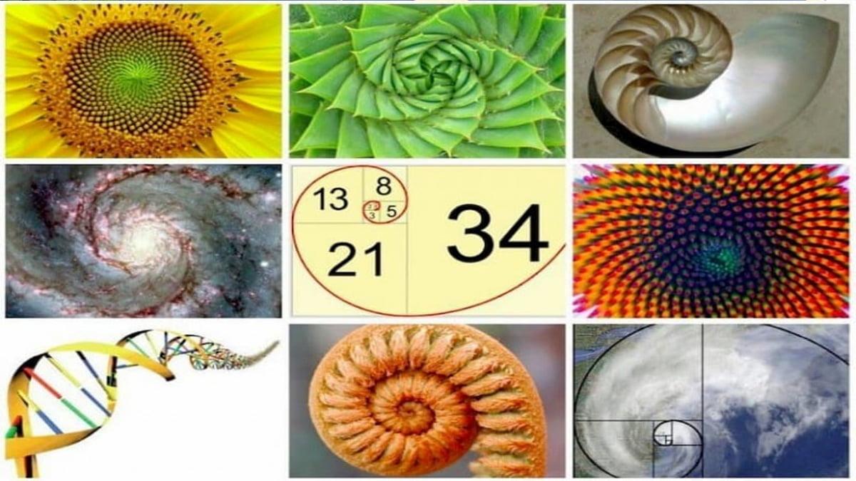 Tỷ lệ Fibonacci – Ngôn ngữ của vũ trụ cũng có mặt ở mọi thị trường